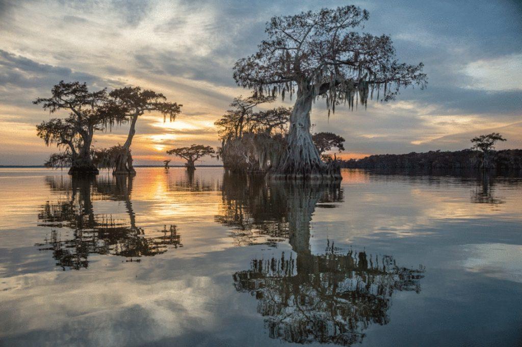 Louisiana Swamp Landscape Photo Workshop
